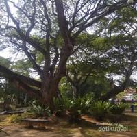 Rindangnya pohon di Taman bunga Merdeka memberikan keteduhan.
