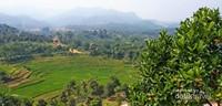 Pemandangan pedesaan