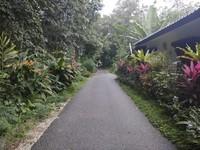 Indahnya jalan setapak menuju kampung Yooi di Langkawi