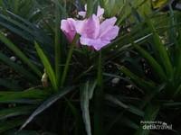 Bunga indah menyepa pagi.
