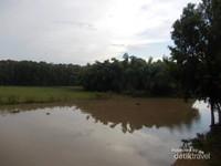 Sungai yang mengalir di hutan Tra Su.