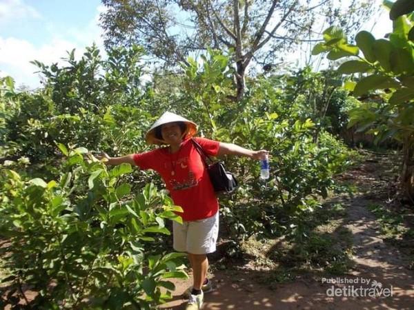 Di tengah perkebunan buah masyarakat pedalaman Can Tho