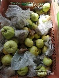Penampakan buah jambu yang sudah dipetik.