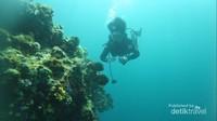 Seorang scuba diver sedang menikmati pemandangan bawah laut Pulau Hari di Sulawesi Tenggara