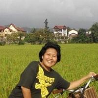 Indahnya persawahan Vang Vieng