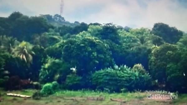 Hijaunya hutan Thakhek