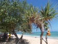 Beberapa tanaman yang ada di tepi pantai yang memberikan keteduhan ketika panas terik