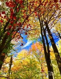 Pemandangan hutan di Taman Coaticook.