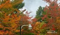 Pohon maple berwarna warni di halaman depan rumah di Saint Denis de Brompton.