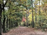 Dedaunan yang berguguran memenuhi jalan setapak