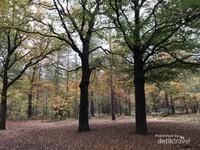 Hutan kota tetap cantik saat musim gugur