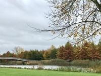 Taman Kota dekat rumah pun tampak memesona saat musim gugur