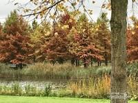 Cantiknya warna pepohonan yang sedang berubah warna