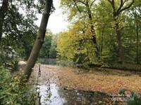 Tampak dedaunan yang berguguran di atas sungai