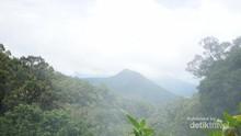 Pengalaman Pertama Mendaki Gunung Pangrango via Cibodas