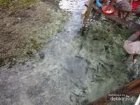 Hal lain yang mengasyikan adalah memberi makan ikan di pesisir, ikan di sini tak segan untuk menghampiri dan menyentuh tangan kita.
