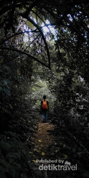 Melewati hutan pegunungan menuju curug cileat