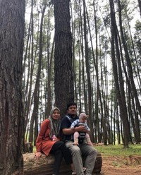 Pohon Pinus Kawasan Danau kerinci