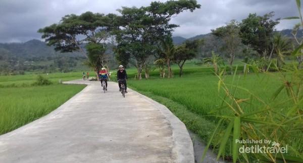 Bersepeda di pagi hari di tengah hamparan persawahan