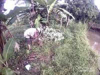 Bercengkrama dengan petani yang sedang panen singkong.