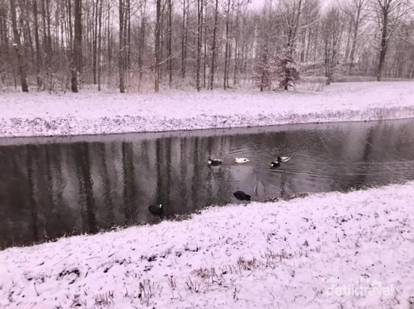 Bebek-bebek yang berenang di sungai-sungai kecil sekitar taman kota