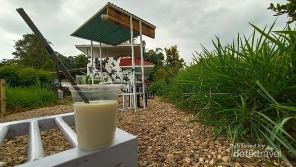 Susu sapi murni Milik Laisy Dairy Farm