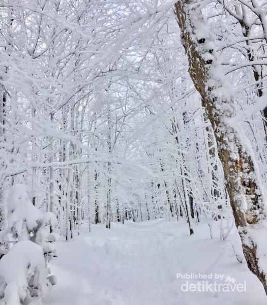 Jalan setapak, rute hiking di gunung Sutton, dekat perbatasan Kanada - USA