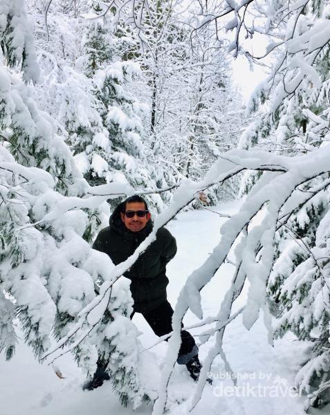 Hutan berselimut salju di Saint Denis de Brompton