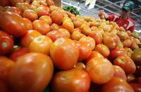 Menurut penelitian medis, pria yang mengkonsumsi lebih banyak tomat kurang rentan terkena kanker prostat karena mengandung lycopene, antioksidan yang membuat tomat berwarna merah dan juga mempertahankan sel dan DNA menjadi terdegradasi.Foto: Rachman Haryanto