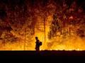 Kebakaran, Gapki Salahkan Pemerintah dan Warga Sekitar Lahan