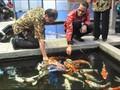 Pantau Twitter, Menteri Susi Baru Tahu Pakan Ikan Masih Mahal