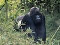 Google Photos Sebut Orang Kulit Hitam Gorila