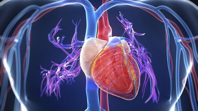 Keajaiban Kalsium, Tak Hanya untuk Tulang Tapi Juga Jantung