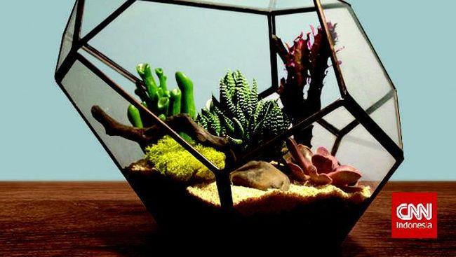 Mengenal Terarium, Sepetak Kebun Berwadah Kaca