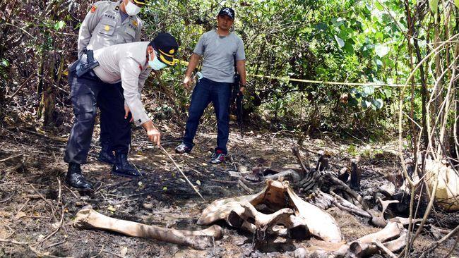 Konservasi Gajah Sumatera Diresmikan di Aceh Barat