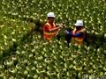 Elpiji 3 Kg Langka, Pertamina Putus Kontrak 10 Distributor