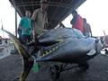 Rusia Protes Tuna Indonesia Banyak Mengandung Merkuri