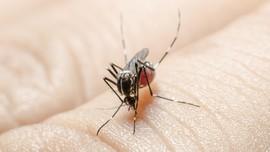 Nyamuk Paling Suka Menggigit Orang Bergolongan Darah O