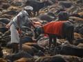 Gadhimai, Festival Penuh Darah di Nepal dan India