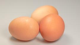 Tips Menyimpan Telur Agar Tahan Lama