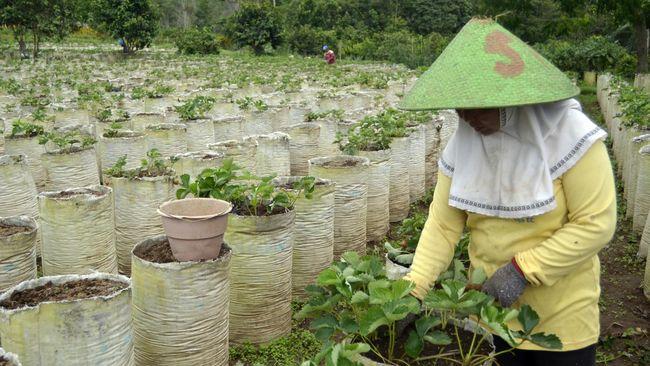 Dampak Corona, Petani Bali Bisa Kuasai Pasar Produk Tertentu