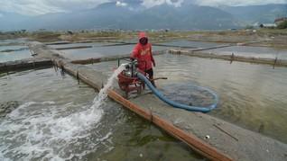 Diguyur Hujan, Petani Garam Cirebon Gagal Panen