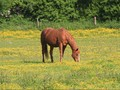 Tak Hanya Tenun, Sumba Juga Punya Festival Kuda Sandelwood