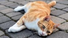 LIPI: Kucing dan Anjing Bisa Tertular Covid-19 dari Manusia