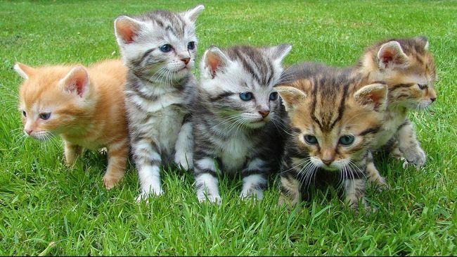 90 Koleksi Contoh Gambar Hewan Kucing Gratis Terbaik
