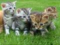 Memelihara Kucing Menjauhkan Anak-anak dari Stres