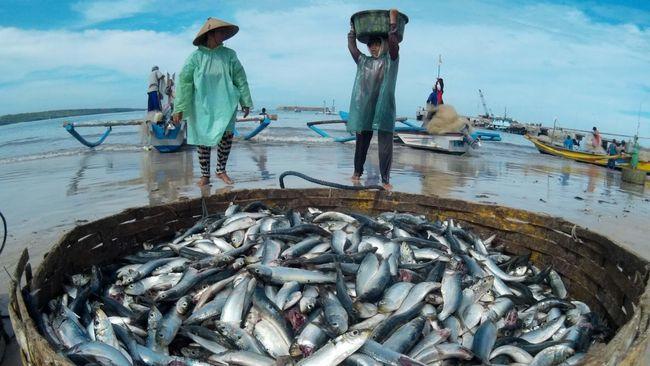 Impor Ikan Dinilai Tak Ganggu Harga Pasar