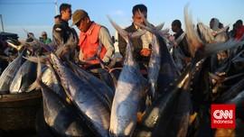 Cerita Seekor Ikan Kerapu Rp4 Juta di Natuna