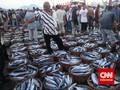 Pasar Ikan Stabil, KKP Enggan Intervensi Harga dan Pasokan