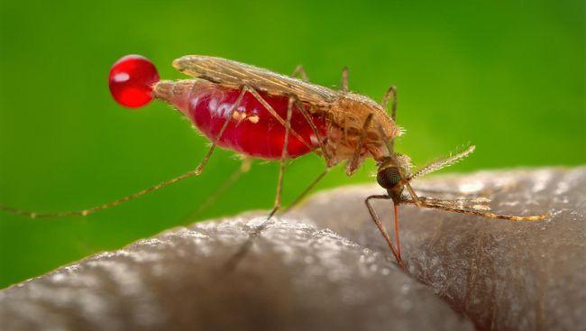 Kenapa Beberapa Orang Lebih Sering Digigit Nyamuk?